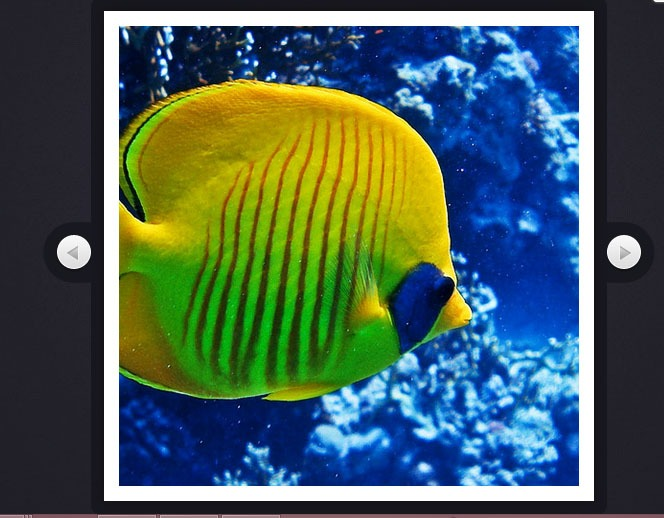 How to code a rotating image slideshow w css3 and jquery - Jquery rotate div ...